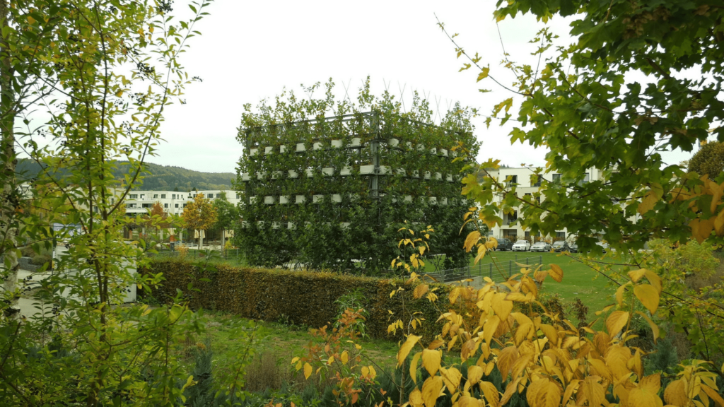 Építési botanika