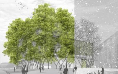 Építési botanika – van jogosultsága és jövője?